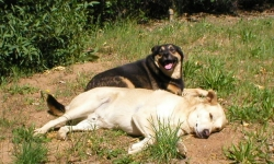 Cali and Mojo (smiling) outside in the sun