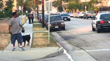 Petitions about the Hawthorne CA police shooting of Max the diog