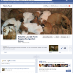 Help the Lake LA Porch Puppies find perfect homes - Google Chrome_2013-11-29_16-24-58