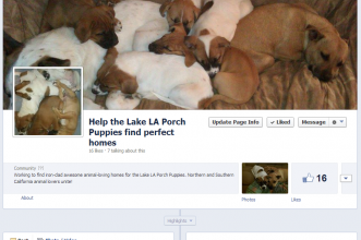 New Porch Puppy Videos and Facebook Page